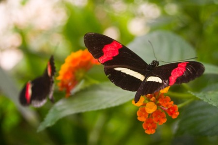 The Tropical Butterfly House
